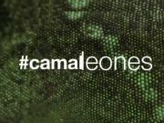 #camaleones